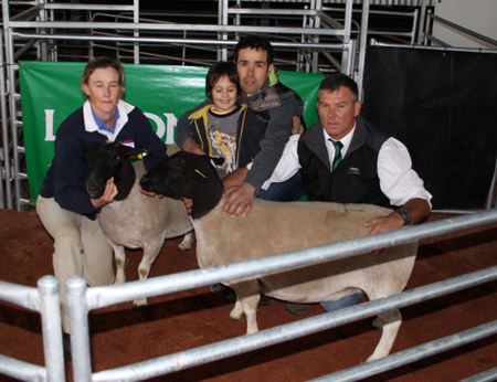 top priced dorper ewes at dell dorper 2012 sale