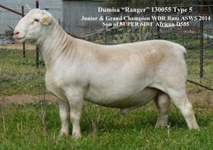 Dumisa Ranger 130055