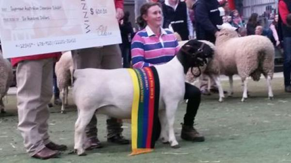 2016 ASWS 'Stretchy' 140076 Interbreed class
